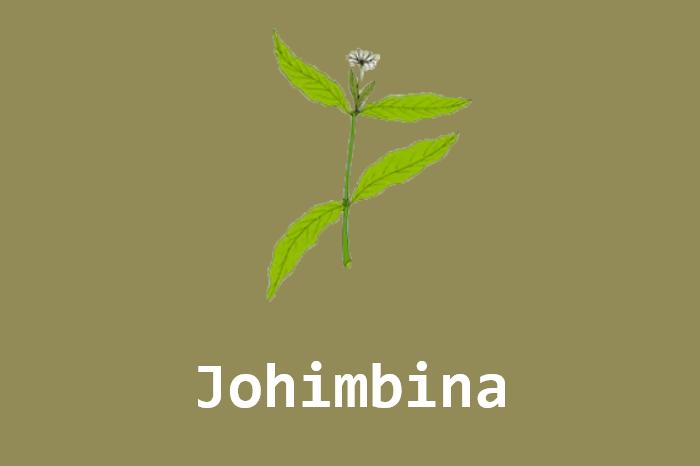 Johimbina