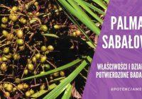 Palma sabałowa: właściwości wyciągu z owoców potwierdzone badaniami